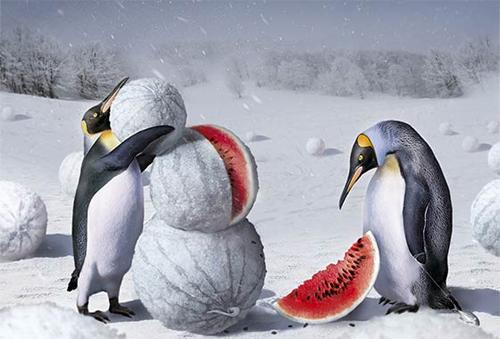 pingouin-scenario-larp